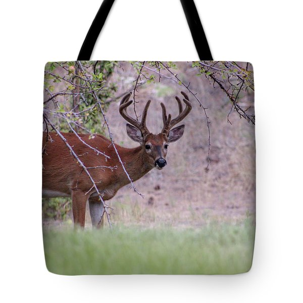 Tote Bag featuring the photograph Red Bucks 2 by Antonio Romero