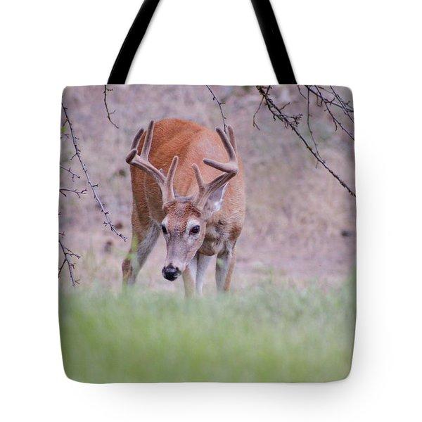 Red Bucks 6 Tote Bag