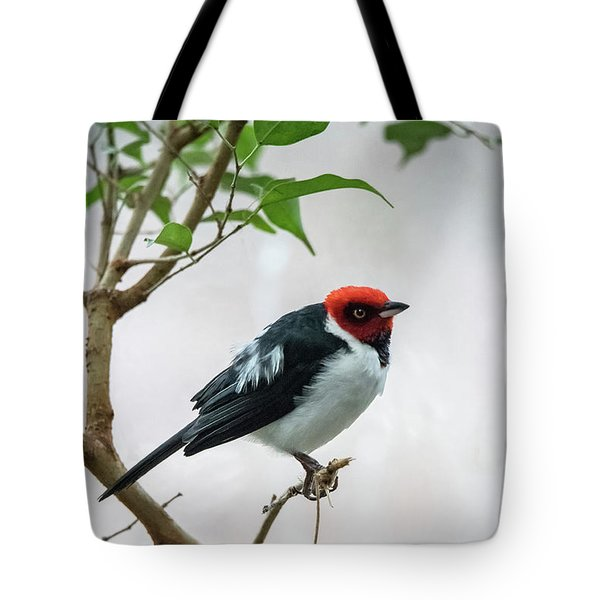 Red Capped Cardinal 2 Tote Bag
