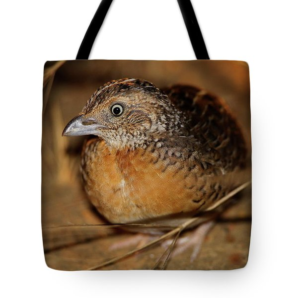 Red-chested Button-quail Tote Bag
