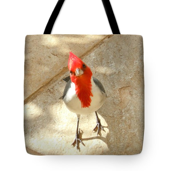 Red-crested Cardinal At My Feet Tote Bag