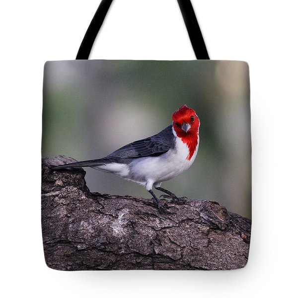 Red Crested Posing Tote Bag