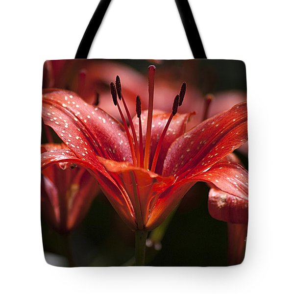 Red Day Lily 20120615_52a Tote Bag by Tina Hopkins