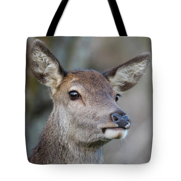 Tote Bag featuring the photograph Red Deer Hind - Scottish Highlands by Karen Van Der Zijden