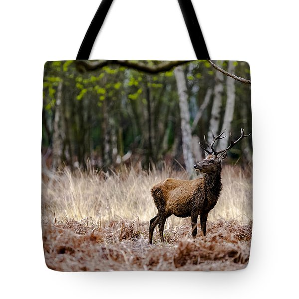 Red Deer Stag Tote Bag