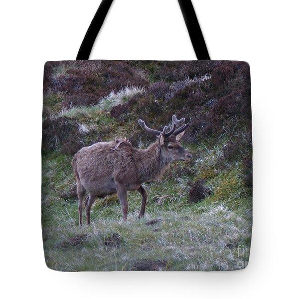 Red Deer Stag - Early June Tote Bag by Phil Banks