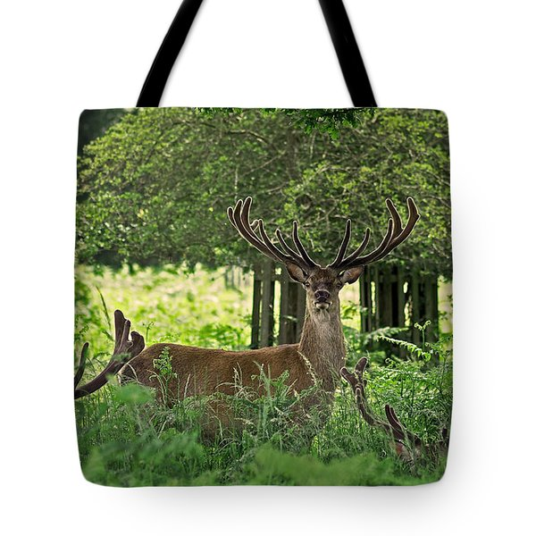 Red Deer Stag Tote Bag by Rona Black