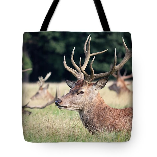 Red Deer Stags Richmond Park Tote Bag