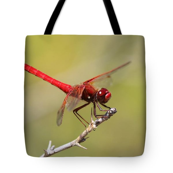 Red Dragonfly - 2 Tote Bag by Christy Pooschke