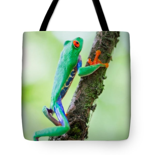 red eyed tree frog Costa Rica Tote Bag