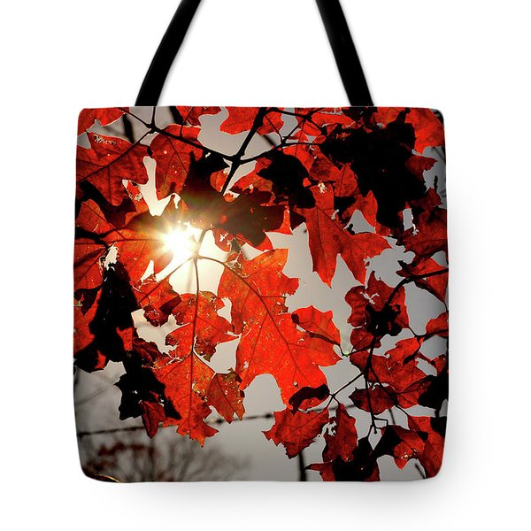 Red Fall Leaves Tote Bag by Meta Gatschenberger
