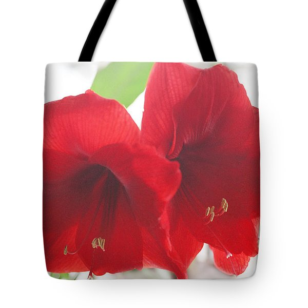 Tote Bag featuring the photograph Amaryllis by Rebecca Harman