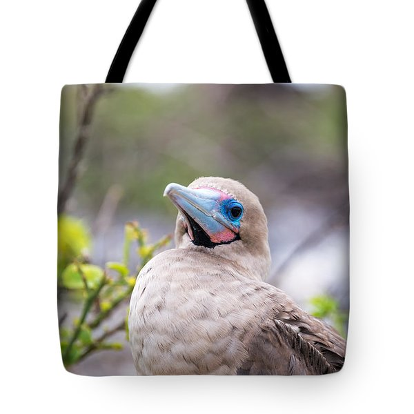 Red Footed Booby Closeup Tote Bag