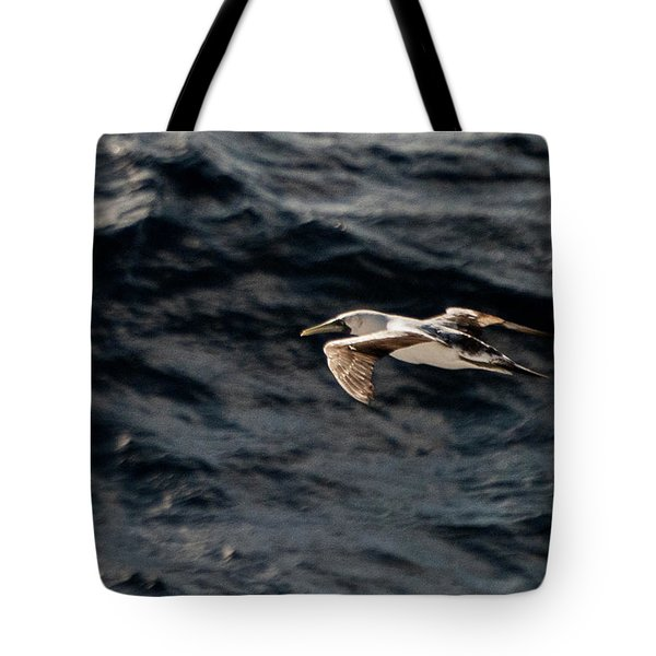 Red-footed Booby, Sula Sula, Caribbean Sea, 2015 Tote Bag