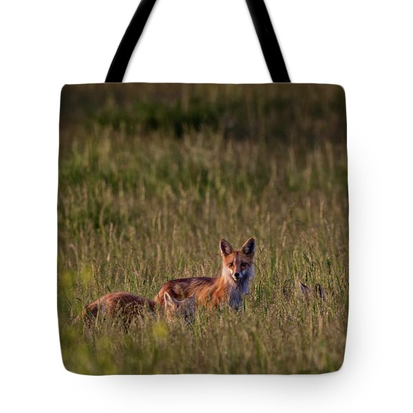 Red Fox Family Tote Bag