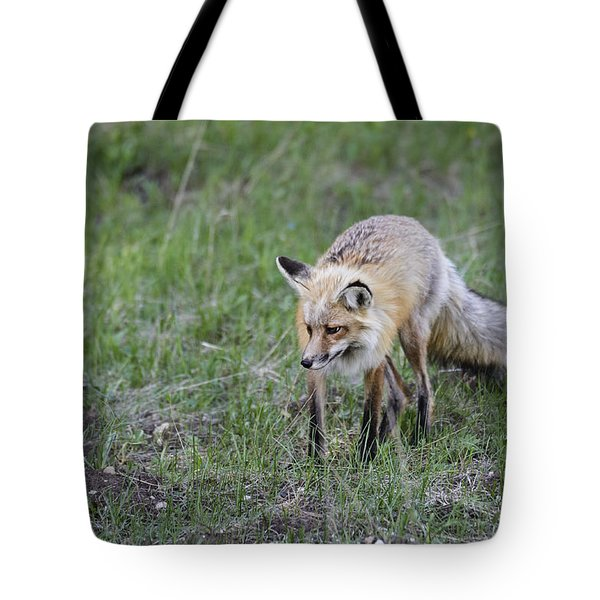 Tote Bag featuring the photograph Red Fox Hunting by John Gilbert