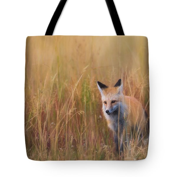 Tote Bag featuring the photograph Red Fox Hunting  by Kelly Marquardt