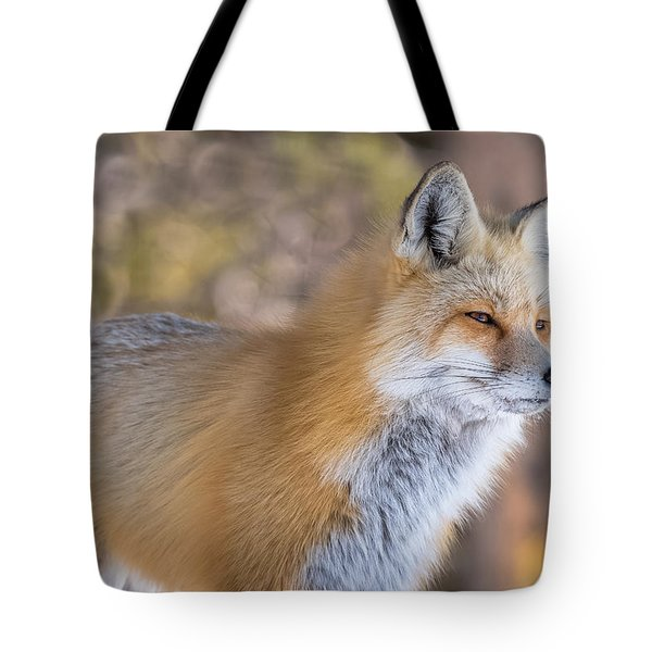 Tote Bag featuring the photograph Red Fox In Winter Glow by Yeates Photography