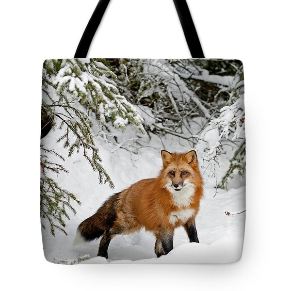 Red Fox In Winter Tote Bag