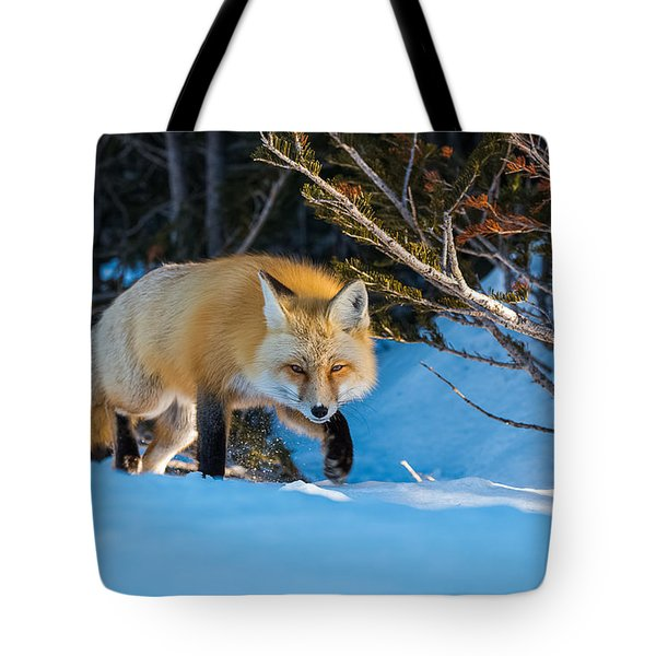 Tote Bag featuring the photograph Red Fox In Winter Snow by Yeates Photography