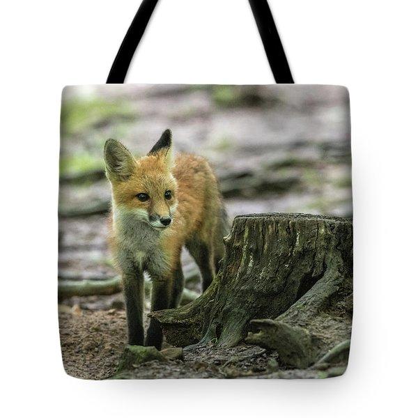 Red Fox Kit Behind A Stump Tote Bag