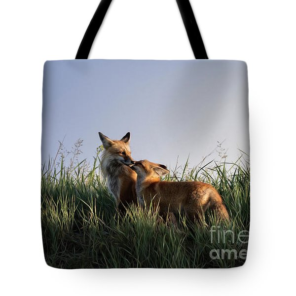 Red Fox Morning Tote Bag