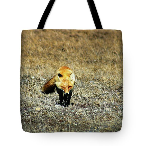 Tote Bag featuring the photograph Red Fox On The Tundra by Anthony Jones