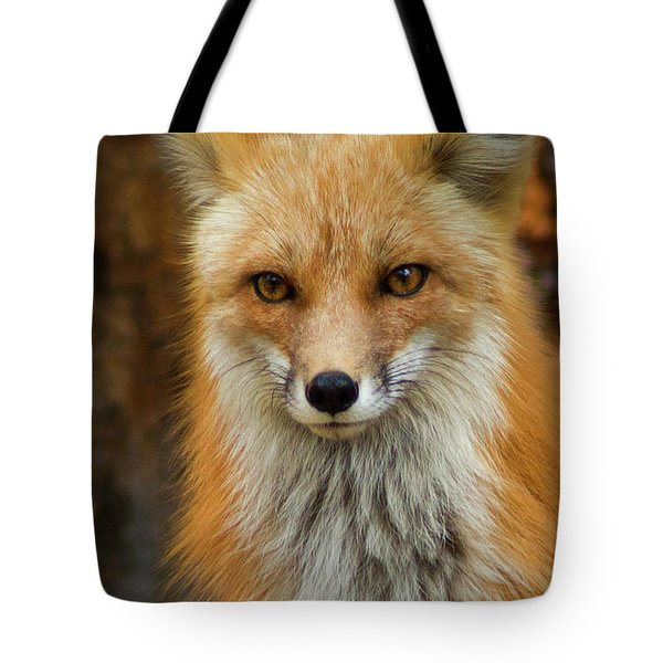 Red Fox Portrait Tote Bag