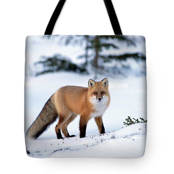 Red Fox Vulpes Vulpes Portrait Tote Bag