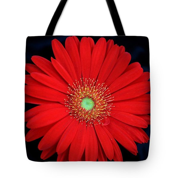 Tote Bag featuring the photograph Red Gerber Daisy On Black by Sheila Brown