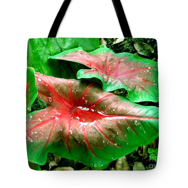 Tote Bag featuring the painting Red Green Caladium Floral Still Life Morning Rain by Mas Art Studio
