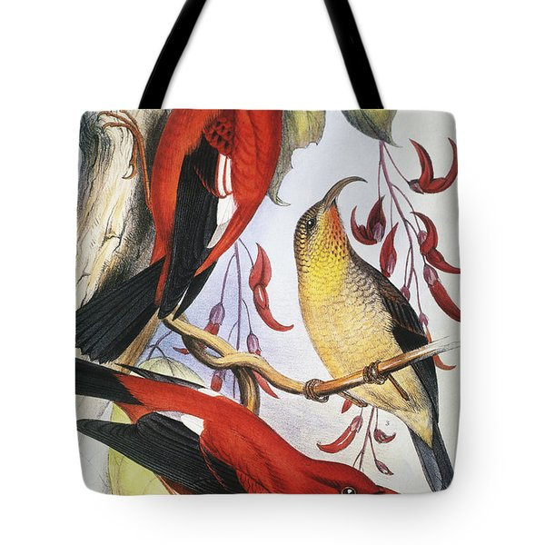 Red Hawaiian Honeycreeper Tote Bag