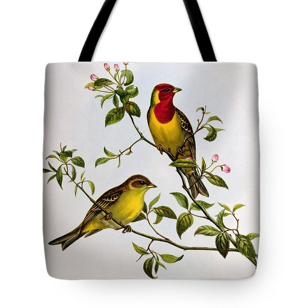Red Headed Bunting Tote Bag by John Gould