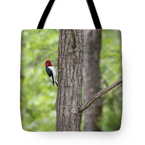 Red-headed Woodpecker 2017-1 Tote Bag by Thomas Young