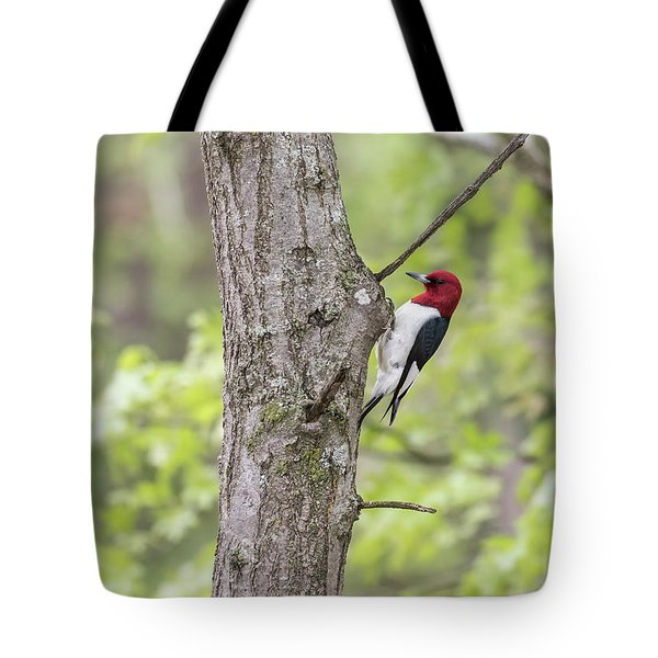 Red-headed Woodpecker 2017-2 Tote Bag by Thomas Young