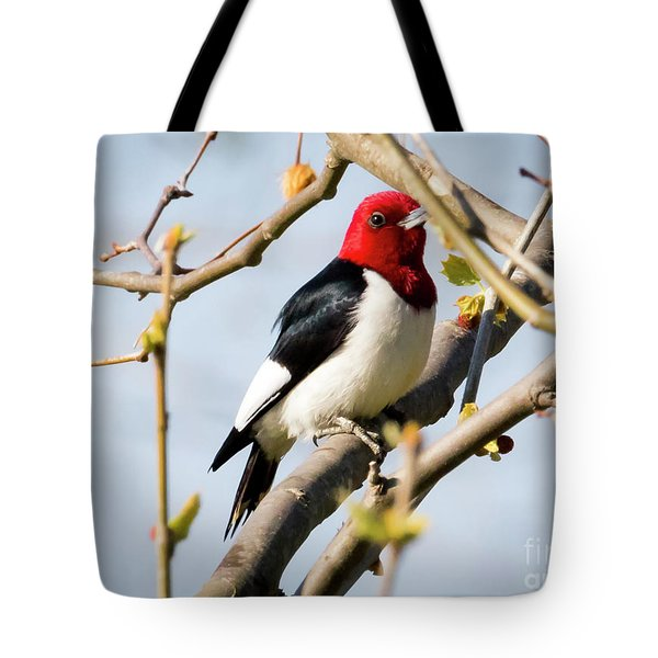Tote Bag featuring the photograph Red-headed Woodpecker At A Glace  by Ricky L Jones