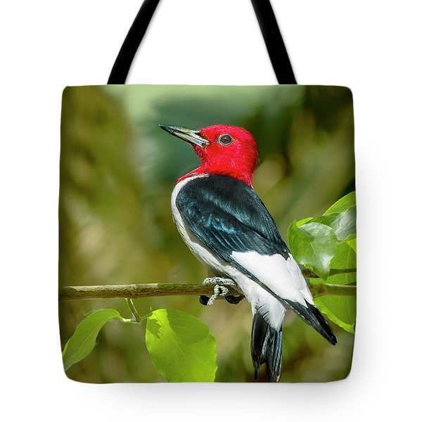 Red-headed Woodpecker Portrait Tote Bag