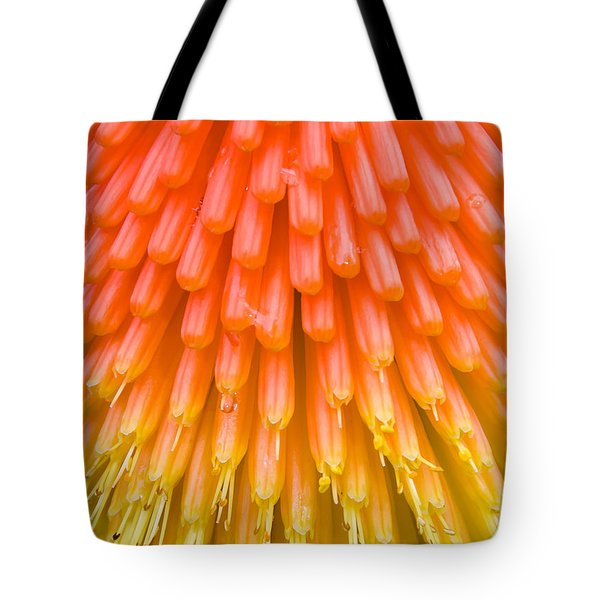 Red Hot Poker Flower Close Up Tote Bag