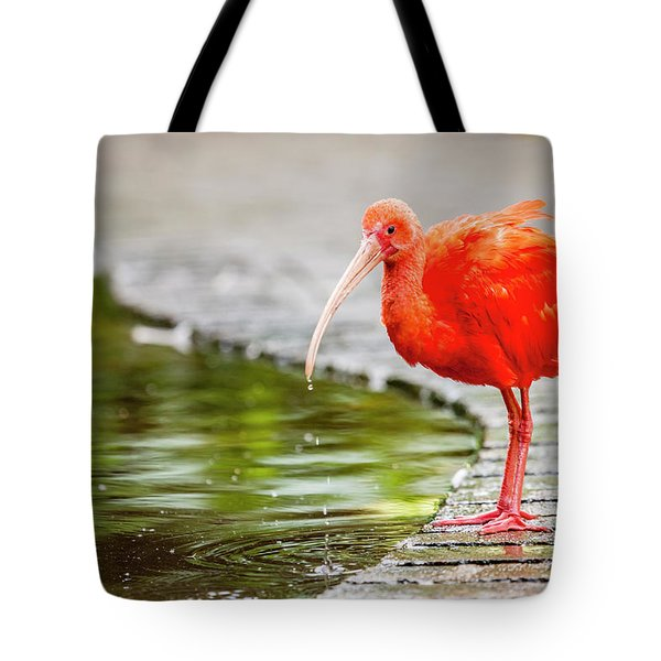 Tote Bag featuring the photograph Red Ibis by Alexey Stiop