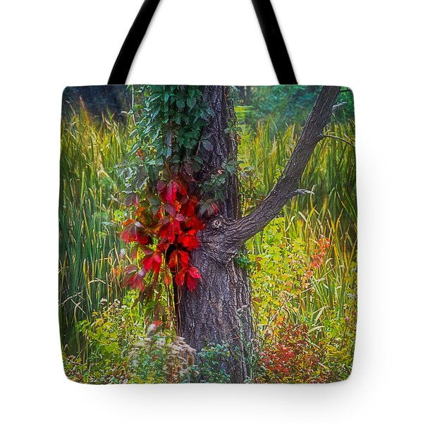 Red Leaves And Vines On Tree In Forest Of Reeds Tote Bag by John Brink