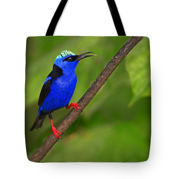 Red-legged Honeycreeper Tote Bag by Tony Beck