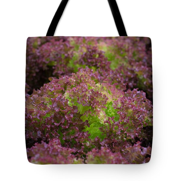 Tote Bag featuring the photograph Red Lettuce by Hans Engbers