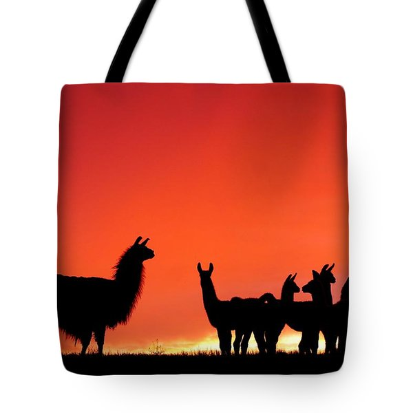 Red Llama Sunset 2 Tote Bag