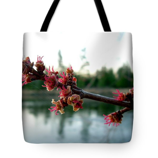 Tote Bag featuring the photograph Red Maple Buds At Dawn by Kent Lorentzen