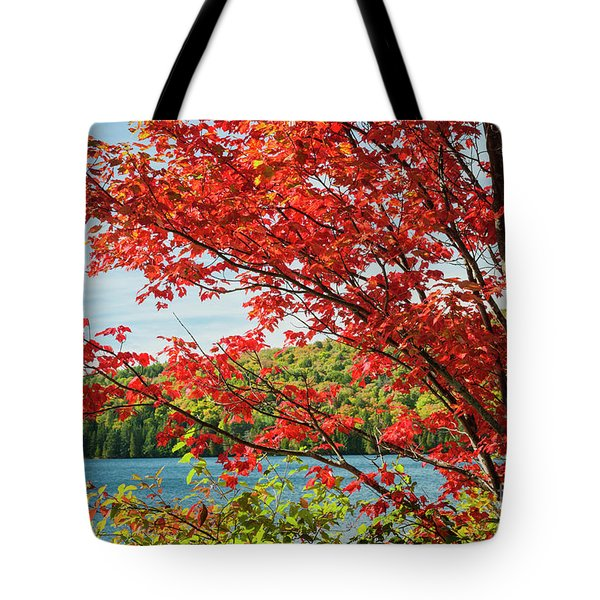 Tote Bag featuring the photograph Red Maple On Lake Shore by Elena Elisseeva