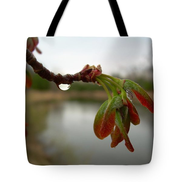 Tote Bag featuring the photograph Red Maple Seed Pods At Dawn by Kent Lorentzen