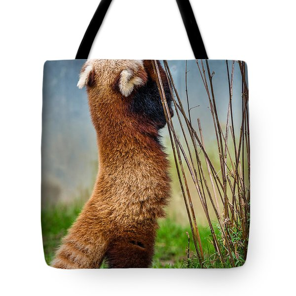 Red Panda As Biped Tote Bag by Greg Nyquist