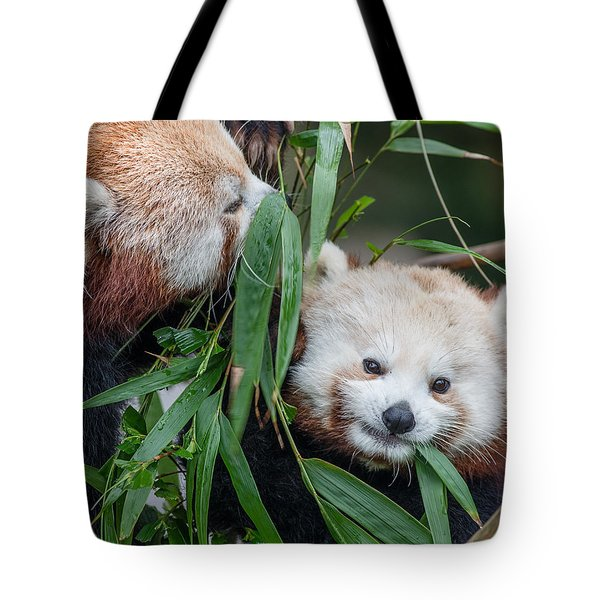 Red Panda Gossip Tote Bag by Greg Nyquist
