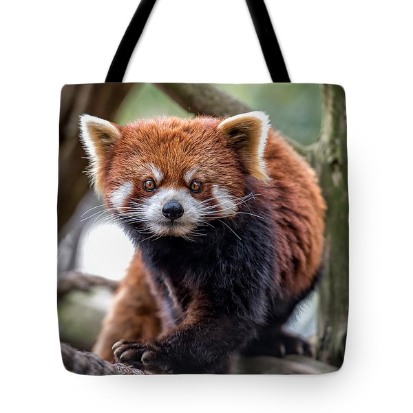Tote Bag featuring the photograph Red Panda V2.0 by Phil Abrams