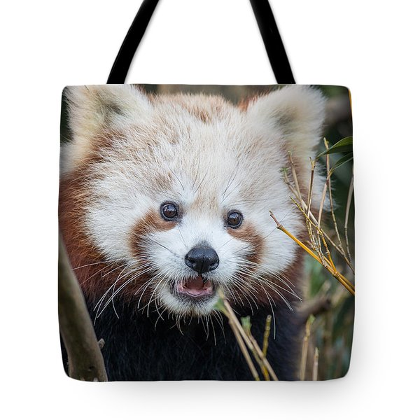 Red Panda Wonder Tote Bag by Greg Nyquist